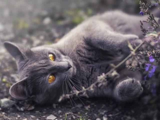 Животное кошка