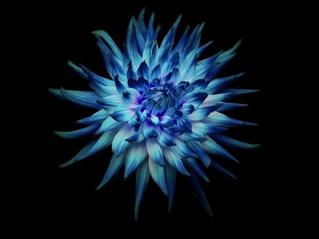Цветок на темном фоне