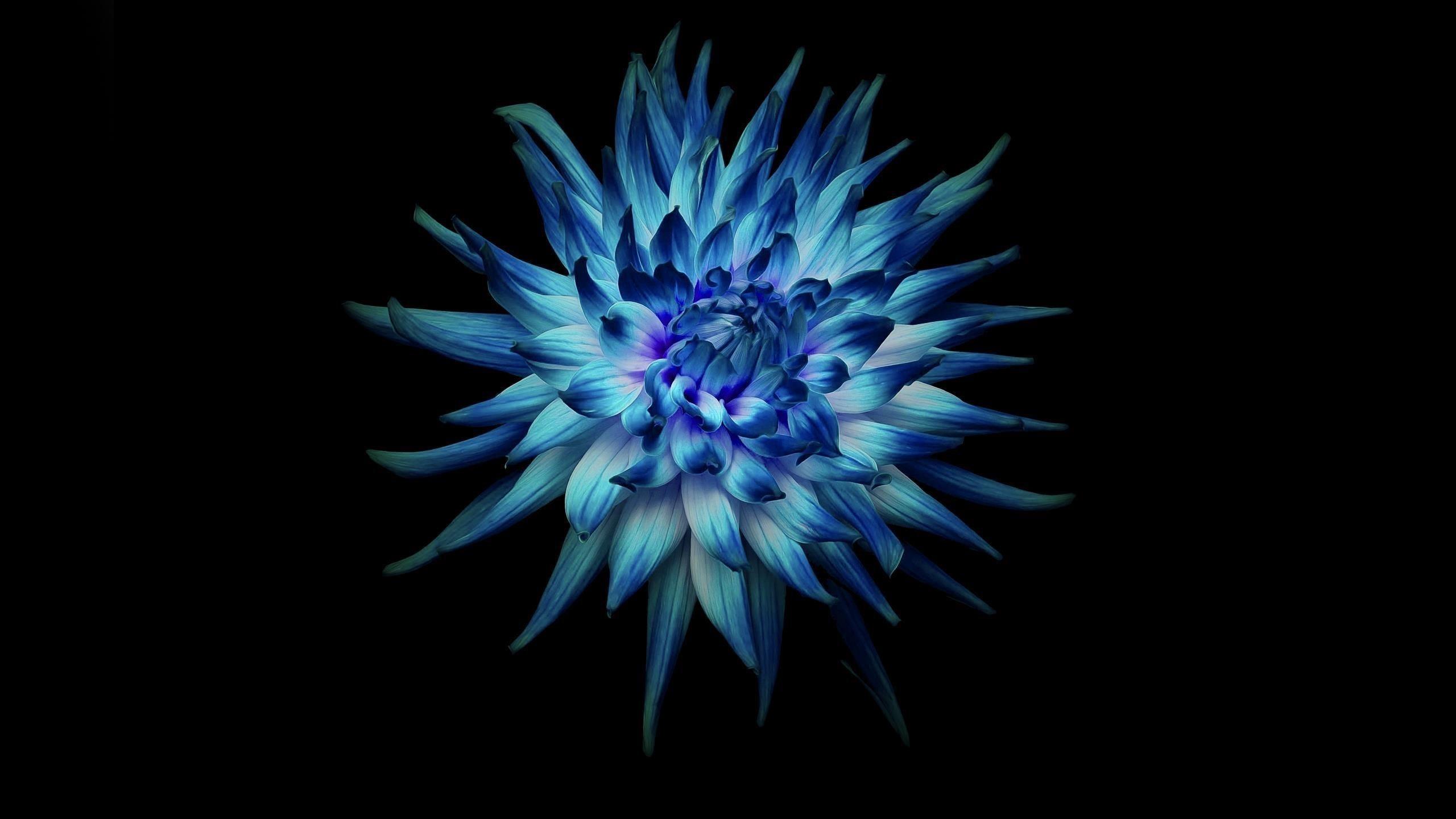 Цветок на темном фоне обои скачать
