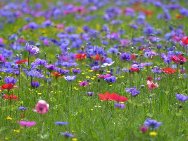 Красные желтые цветы лаванды зеленая трава полевые цветы