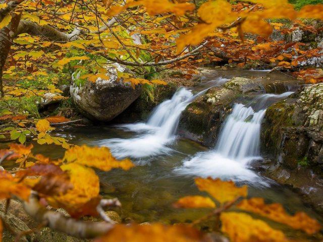Водопады река и деревья с желтыми листьями во время осенней природы