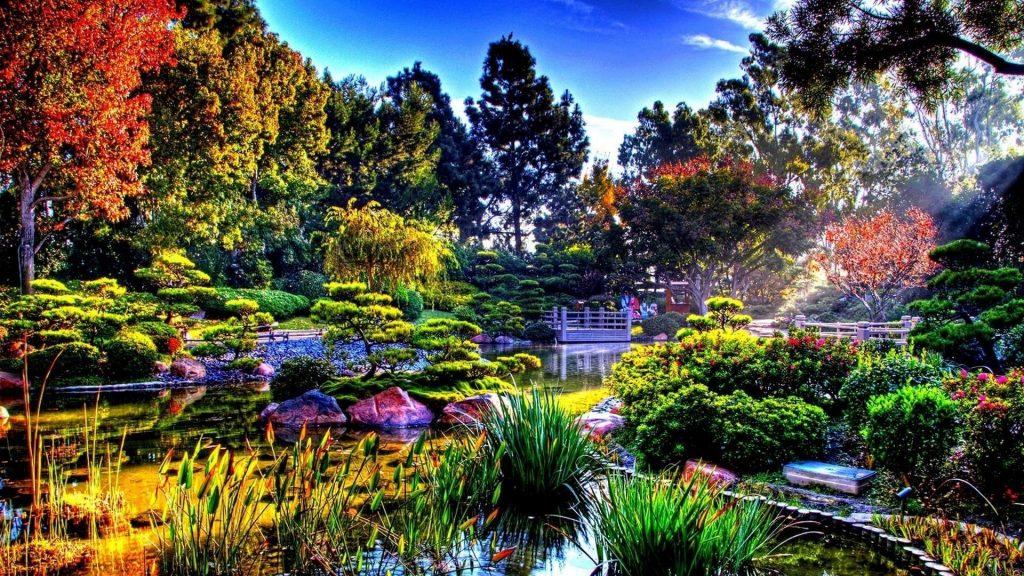 Вода между травами в окружении деревьев под голубым небом природа обои скачать