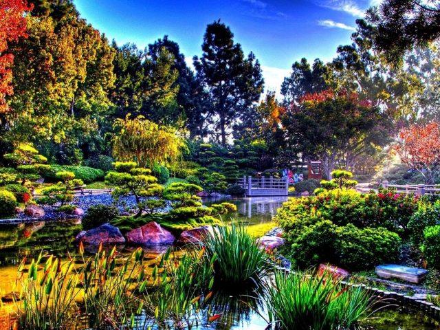 Вода между травами в окружении деревьев под голубым небом природа