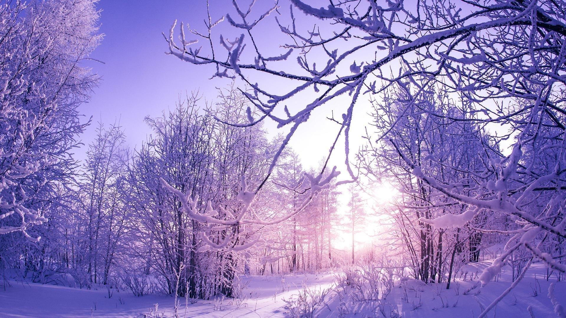 Заснеженные зимние деревья обои скачать