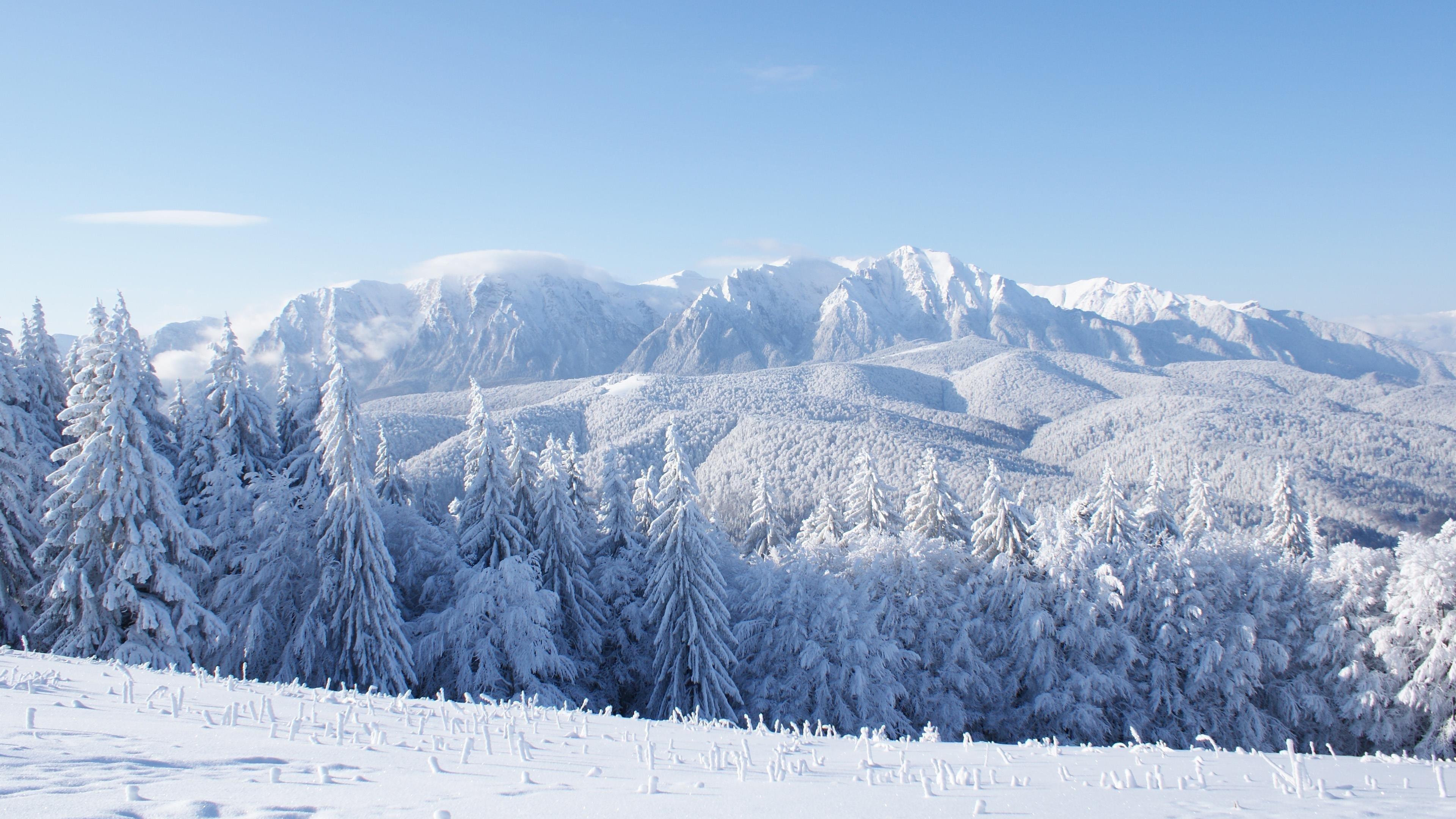 Заснеженные горные деревья и полевая природа обои скачать