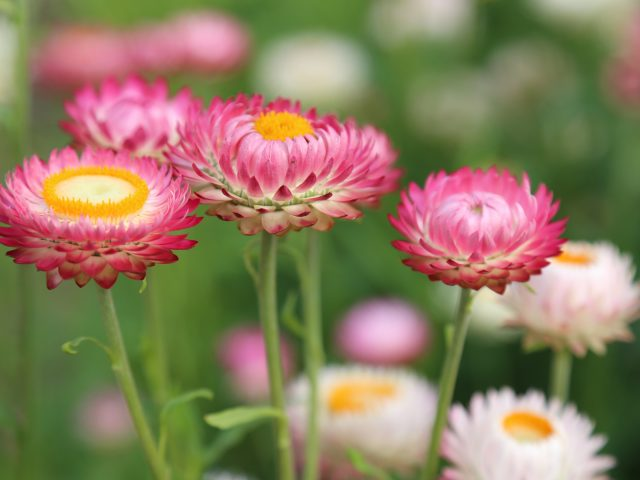 Летний цветочный луг.