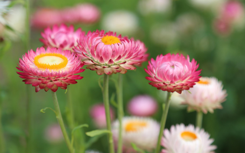 Летний цветочный луг. обои скачать