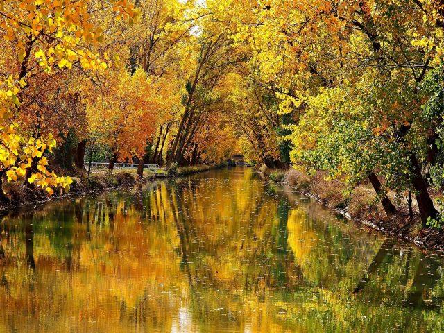 Река между желтыми осенними деревьями с отражением природы