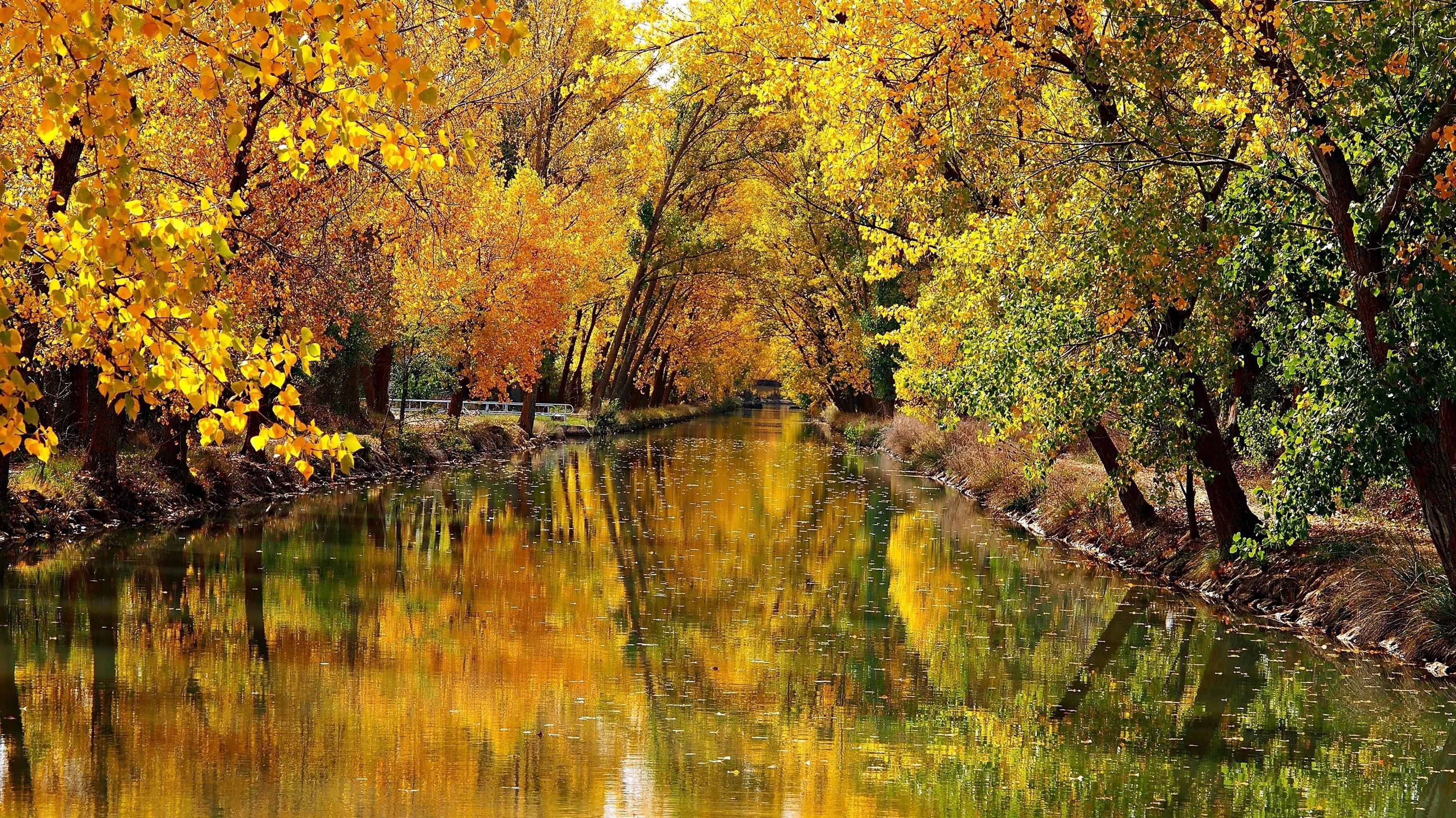 Река между желтыми осенними деревьями с отражением природы обои скачать