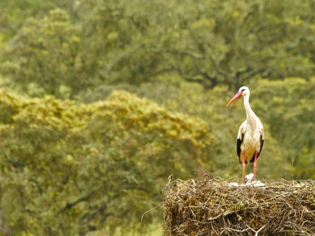 Желто-черная птица стоит рядом с гнездом в размытом зеленом фоне животных
