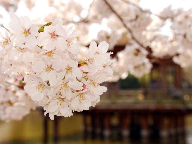 Крупным планом вид на природу белых цветущих цветов