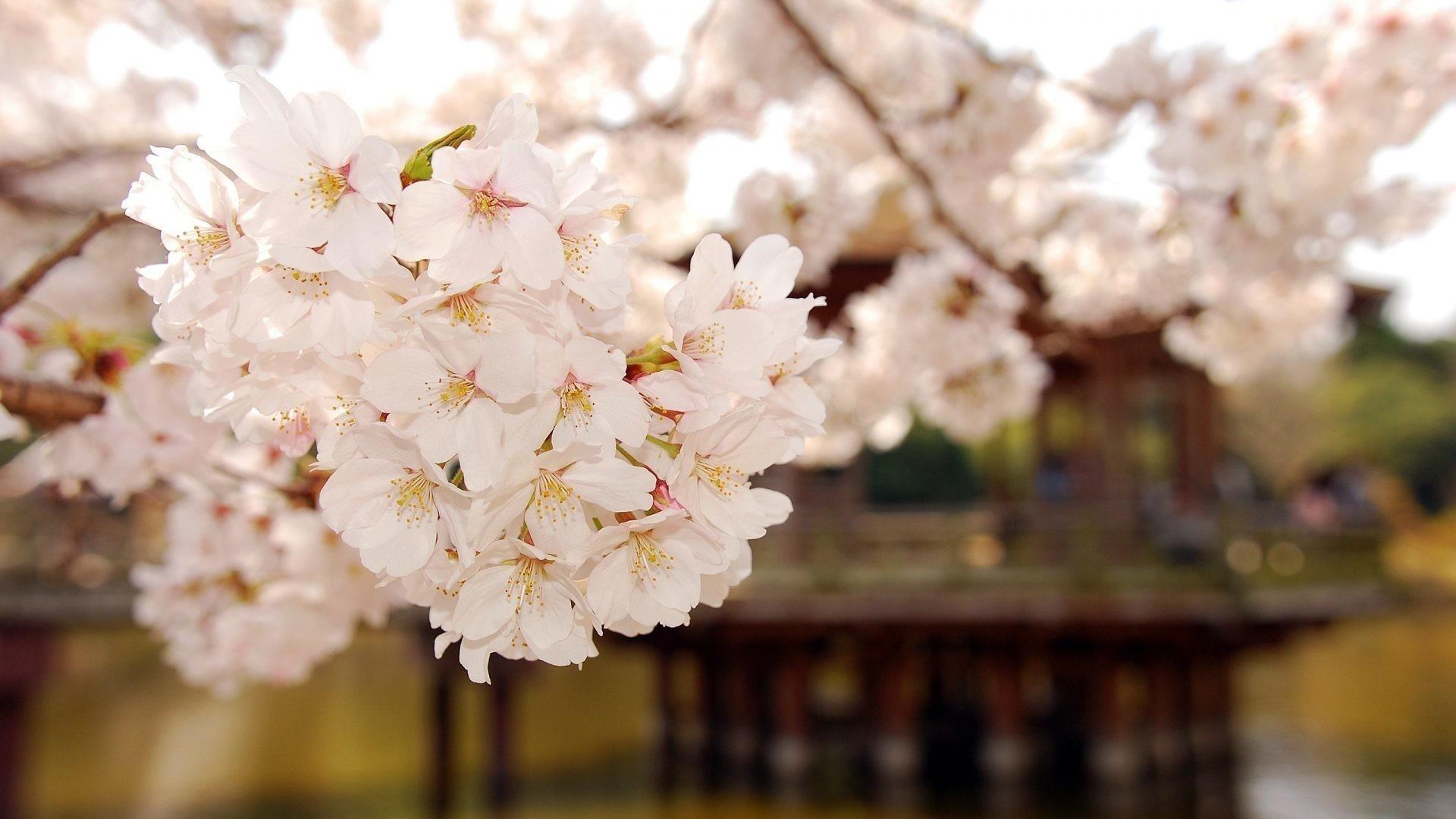 Крупным планом вид на природу белых цветущих цветов обои скачать