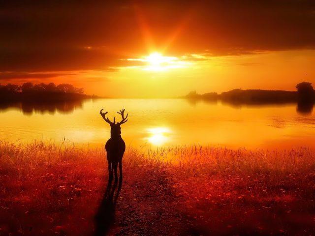 Силуэт оленя стоящего перед озером во время заката природа