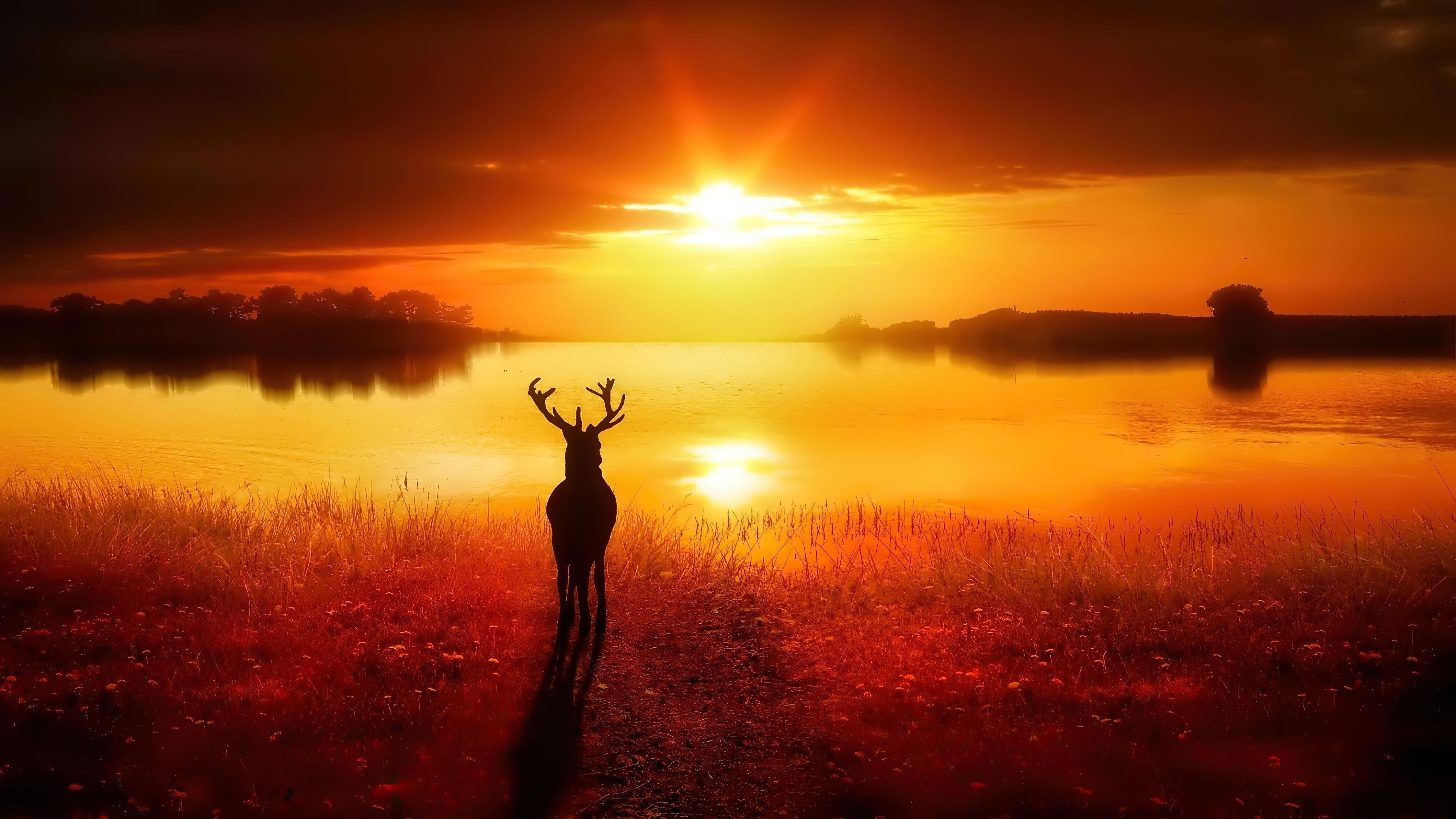 Силуэт оленя стоящего перед озером во время заката природа обои скачать