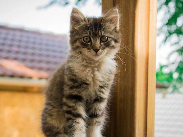 Черно-белая кошка котенок сидит в размытом доме на фоне кошки
