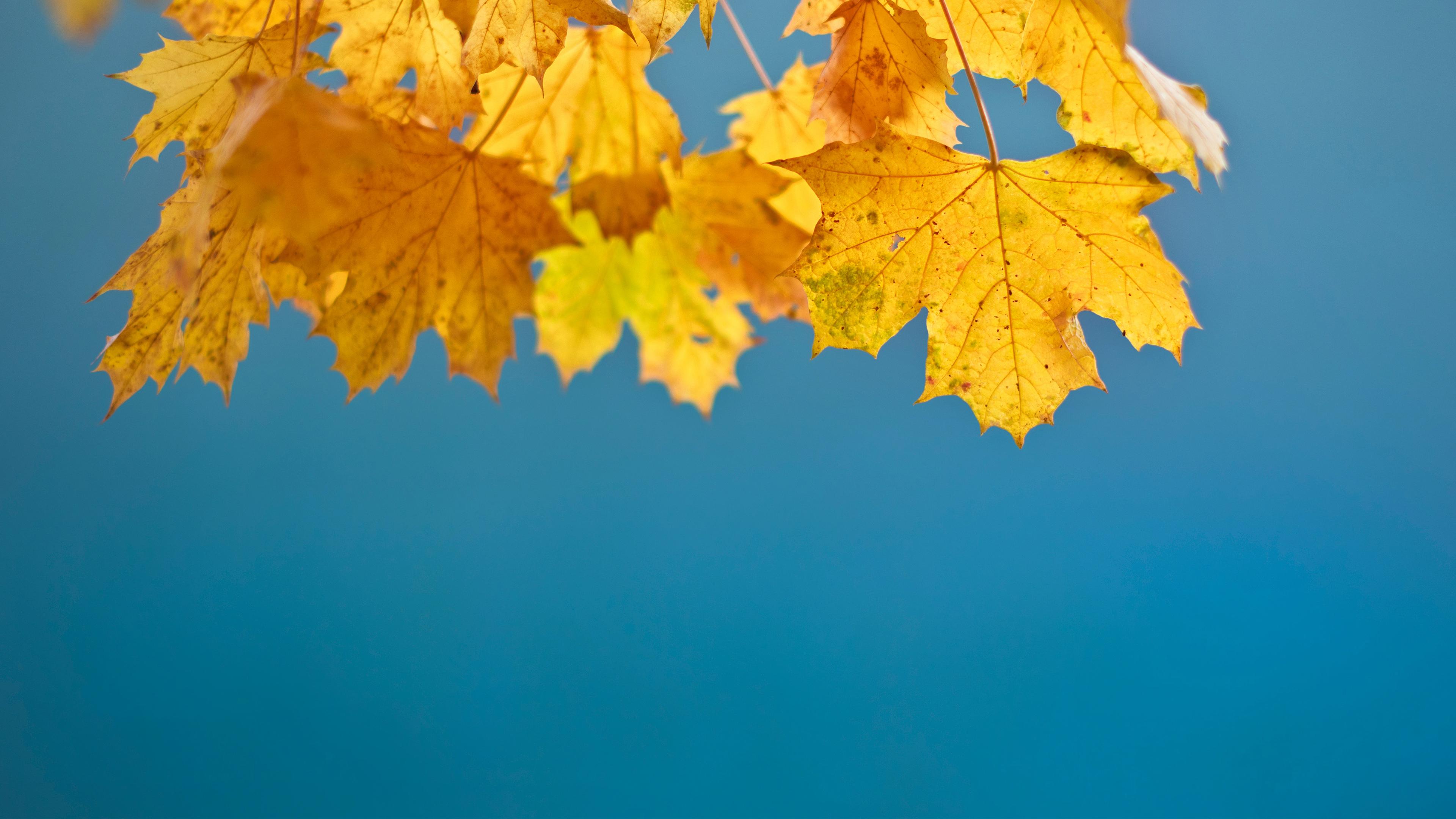 Осенний лист обои скачать
