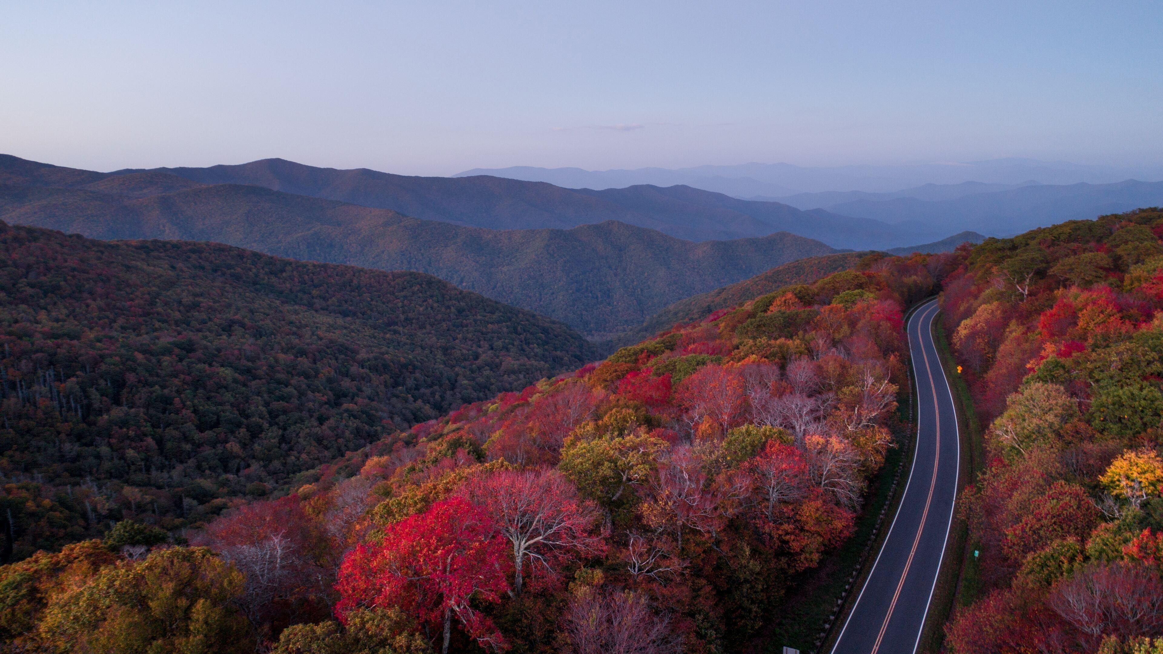 Дорога через осенний лес и деревья природа обои скачать
