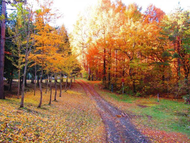 Красивая песчаная дорожка между зелеными желтыми красными осенними листьями ветви деревьев в лучах солнца на фоне природы