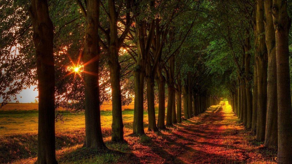 Тропинка между лесом редколесьем с солнечным лучом природы обои скачать