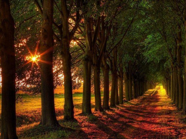 Тропинка между лесом редколесьем с солнечным лучом природы