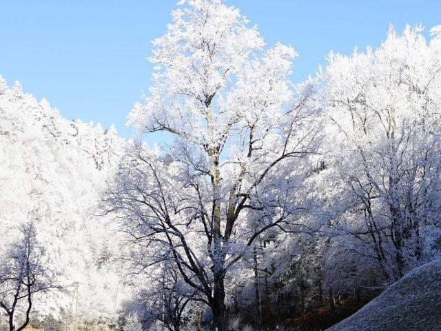 Холм мороз дорога деревья природа