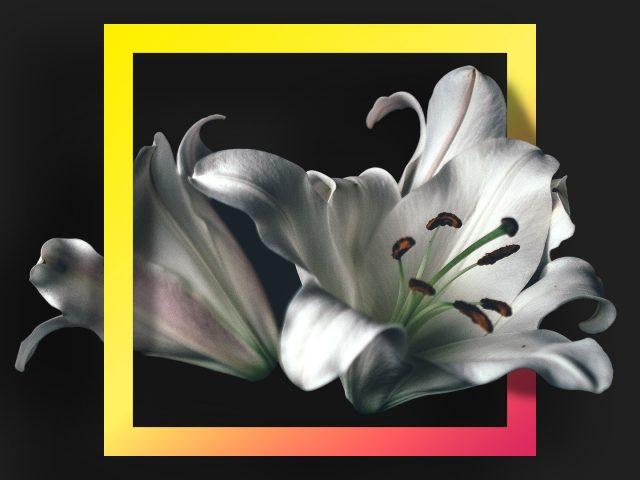 Цветы, геометрия
