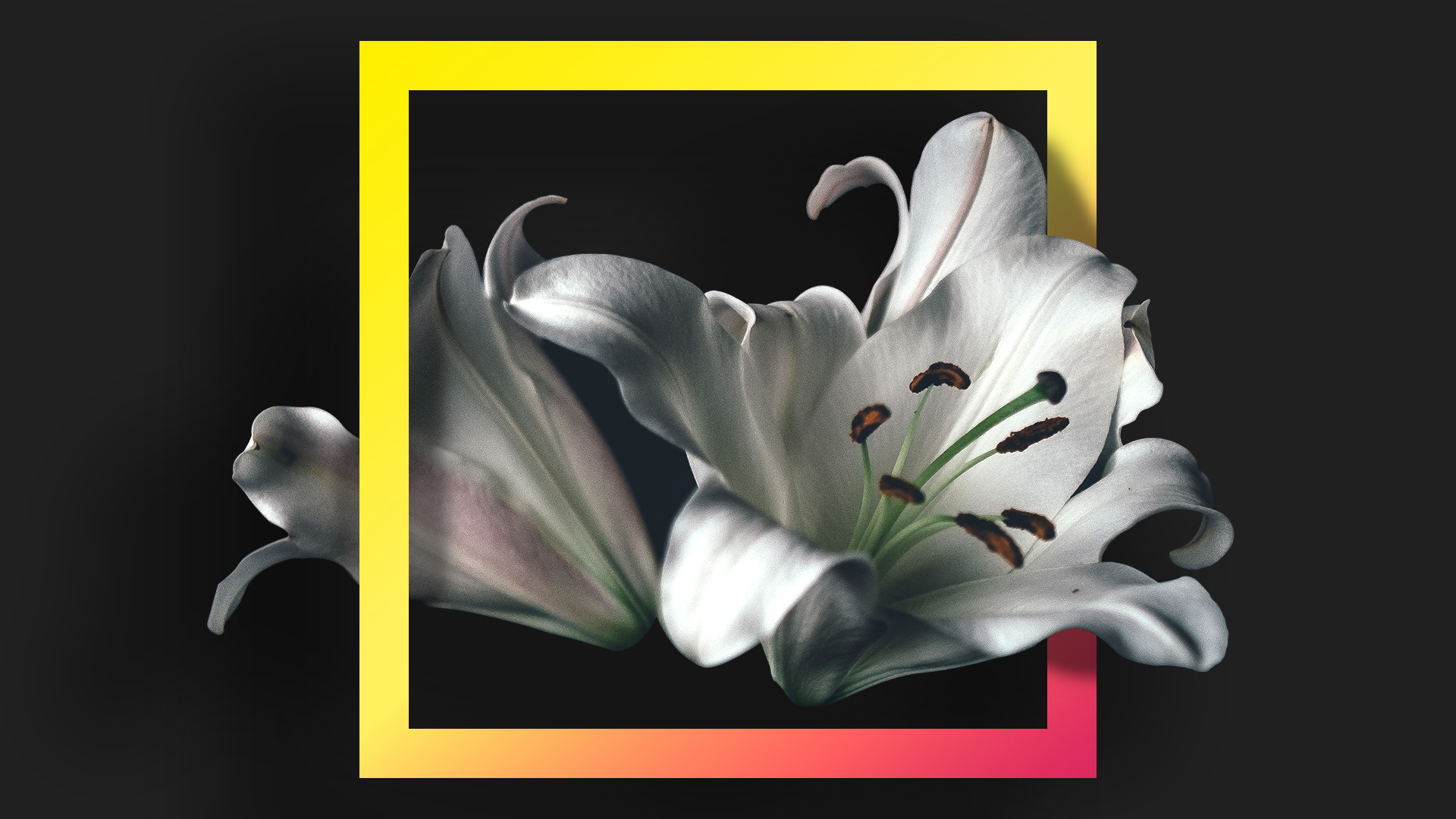 Цветы, геометрия обои скачать