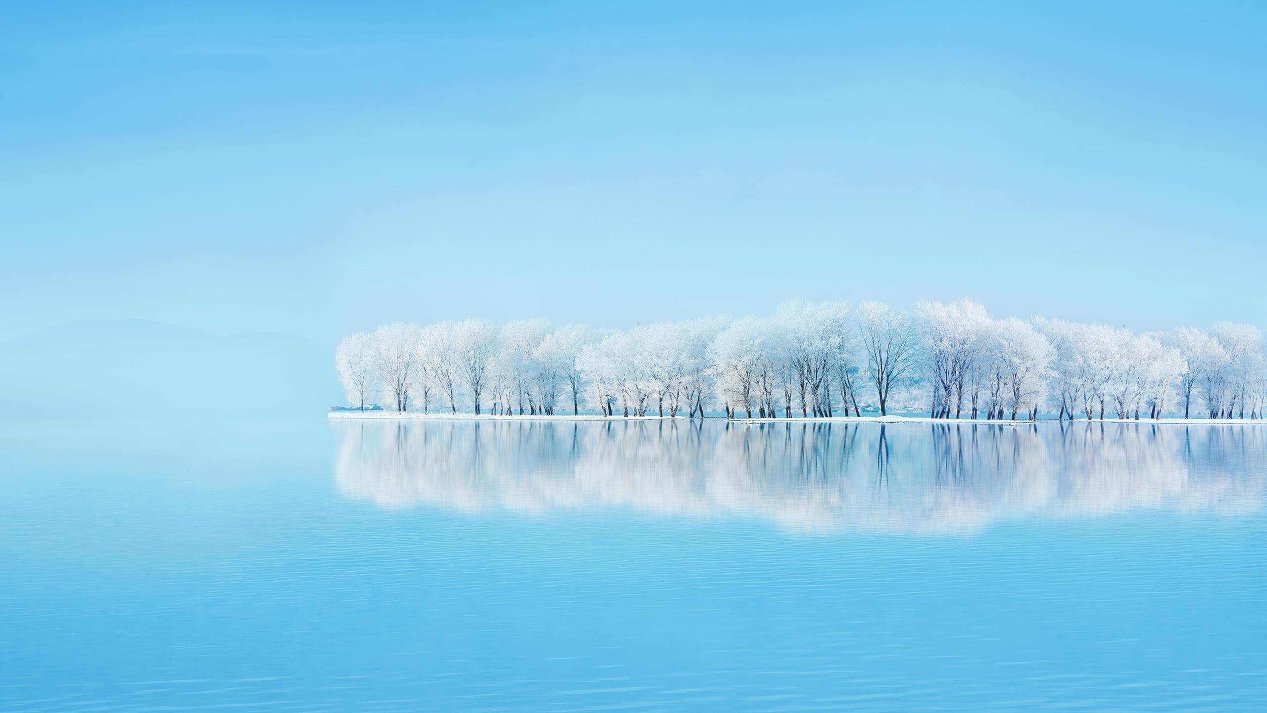 Матовые отражения деревьев обои скачать