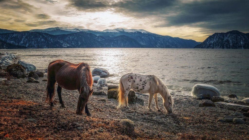 Белые коричневые лошади стоят на пляже песчаная лошадь обои скачать