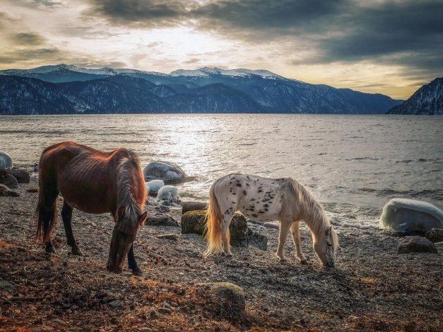 Белые коричневые лошади стоят на пляже песчаная лошадь