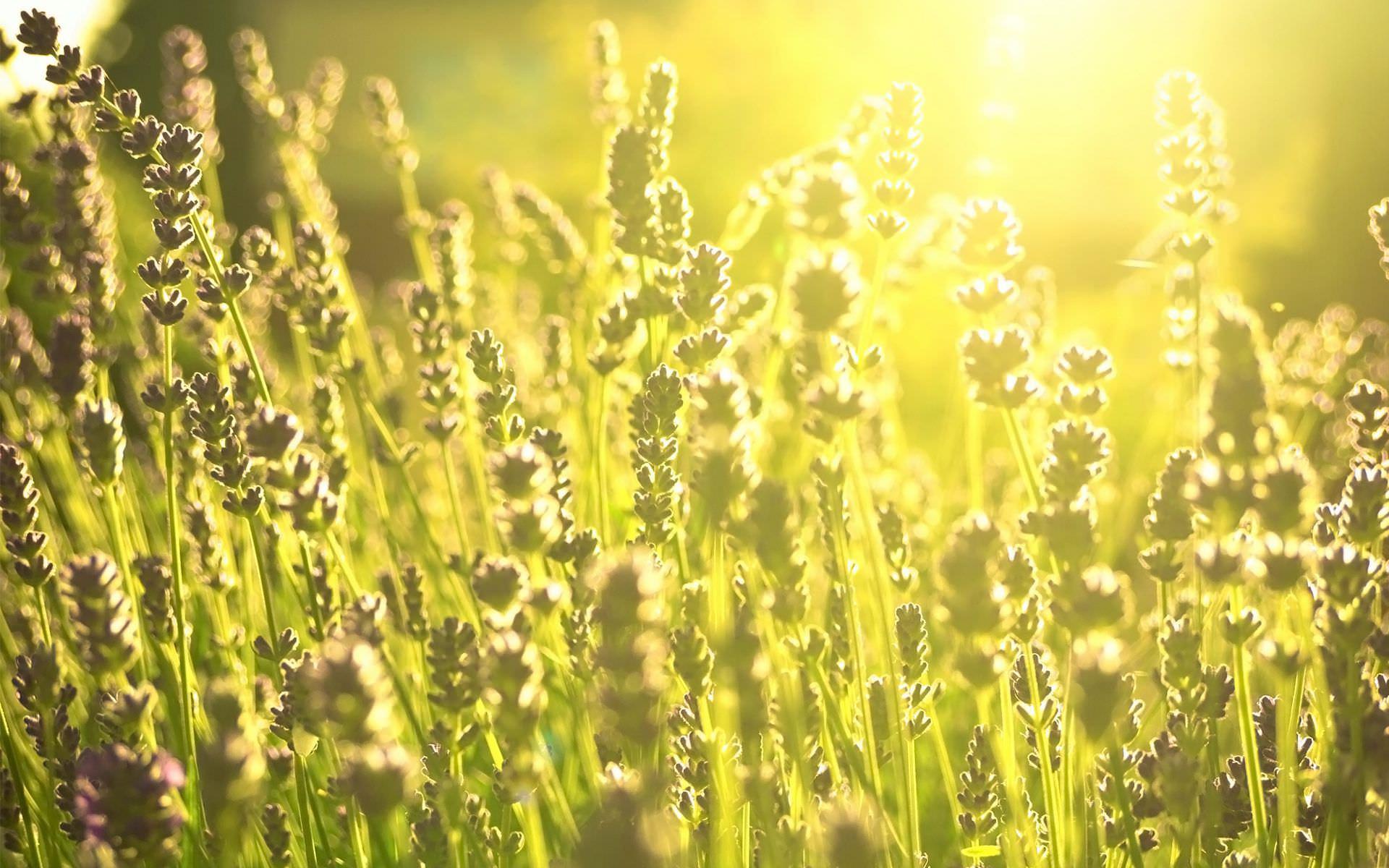 Дневной свет зеленых полей. обои скачать