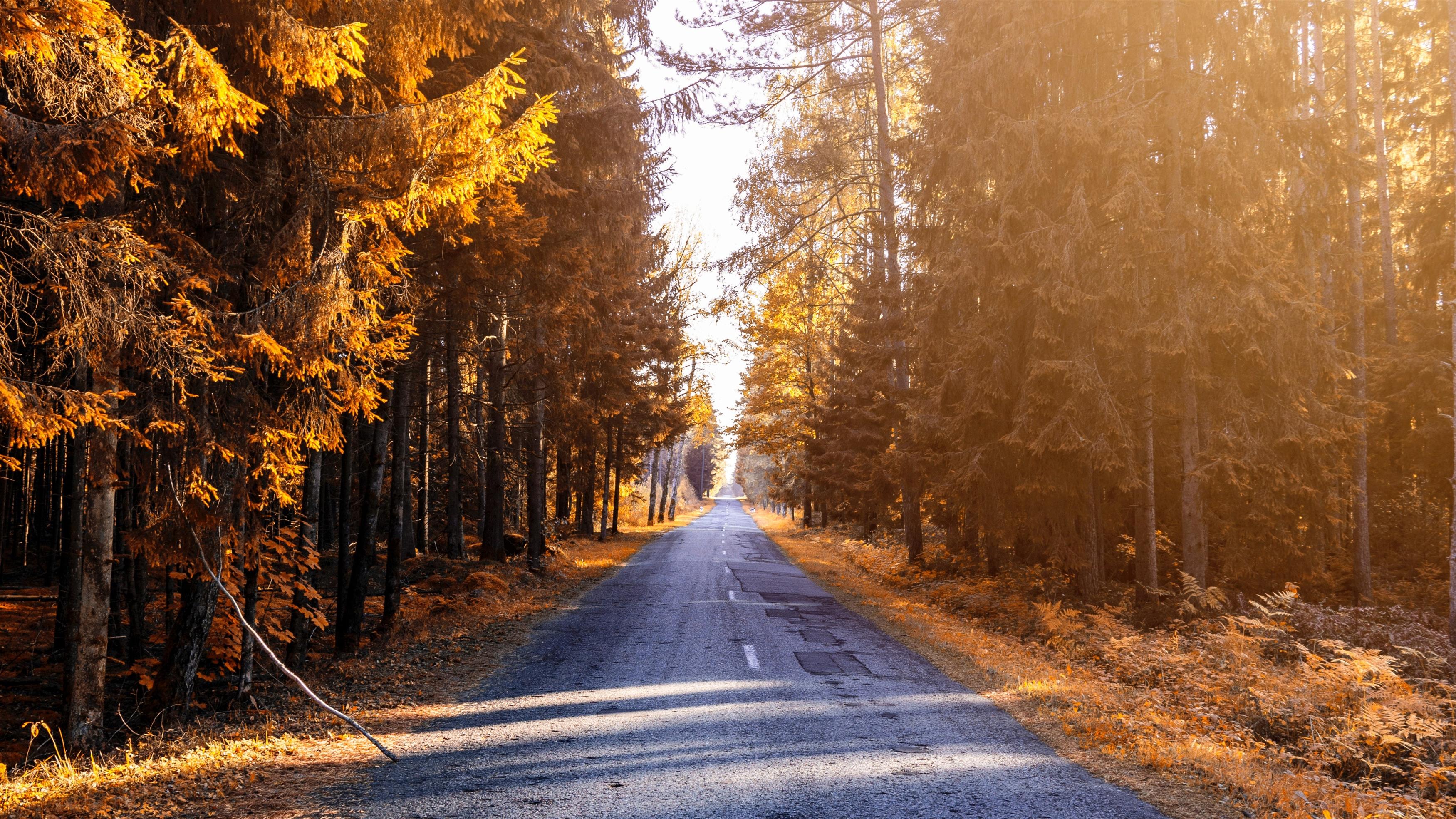 Осенний лес обои скачать