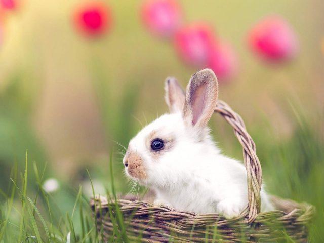 Кролик сидит в коричневой плетеной корзине на зеленой траве полевых животных