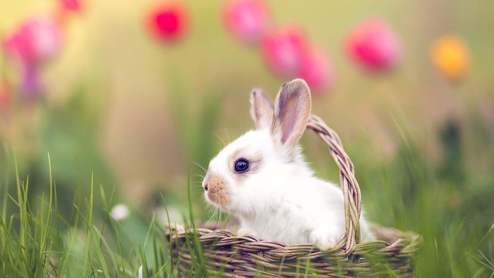 Кролик сидит в коричневой плетеной корзине на зеленой траве полевых животных обои скачать