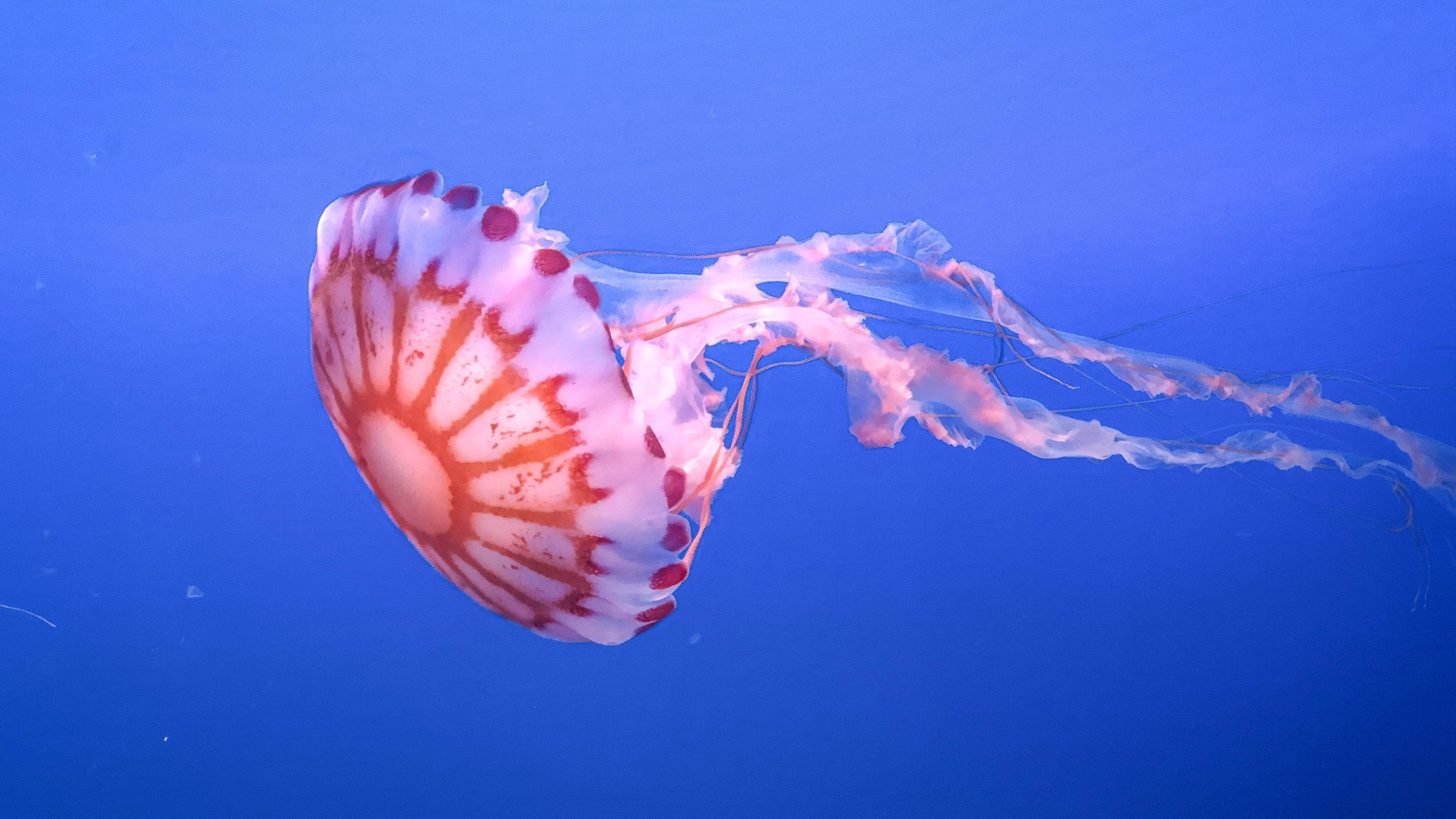 Щупальце медузы прекрасный подводный мир обои скачать