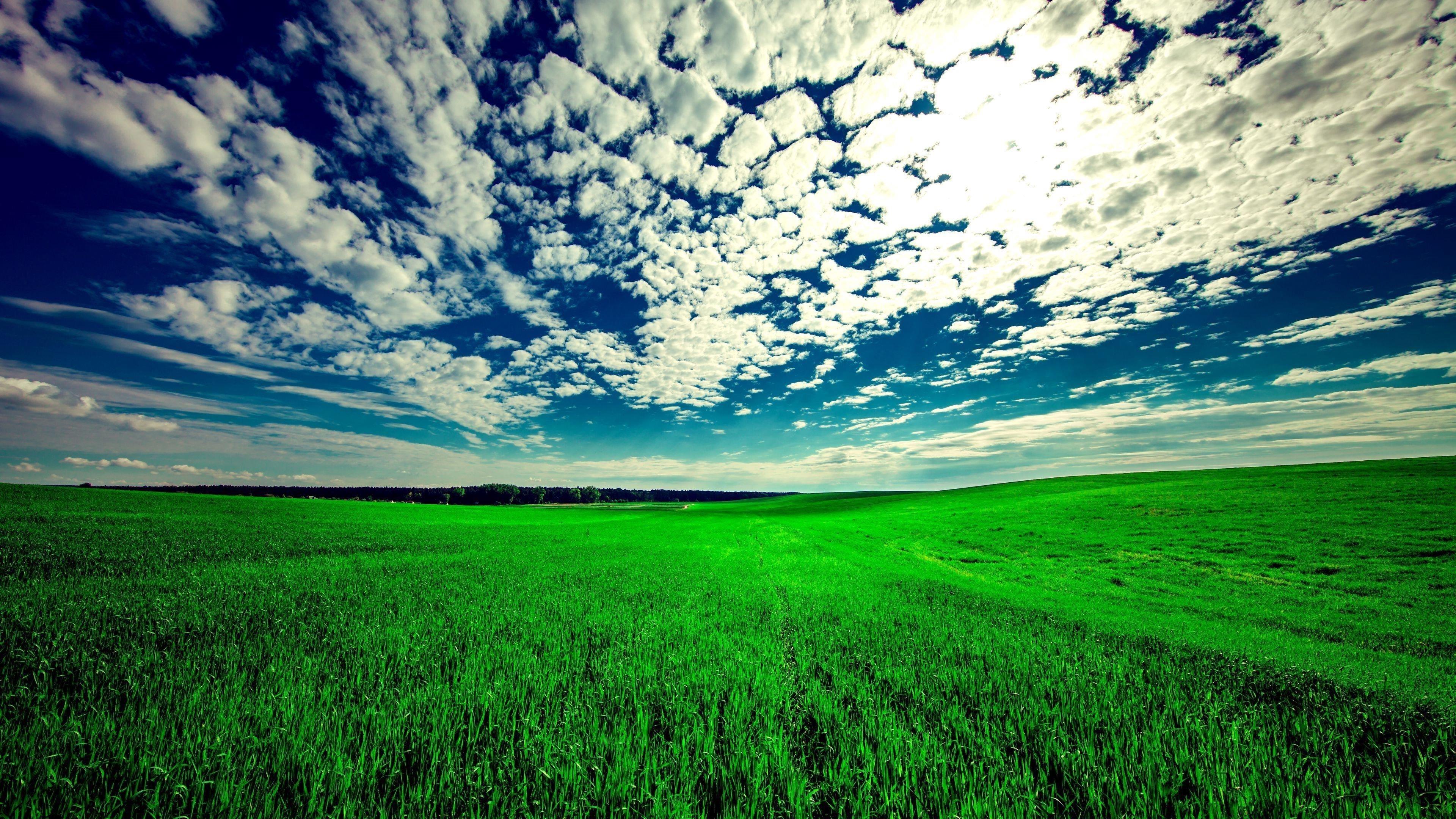 Поле небо трава обои скачать