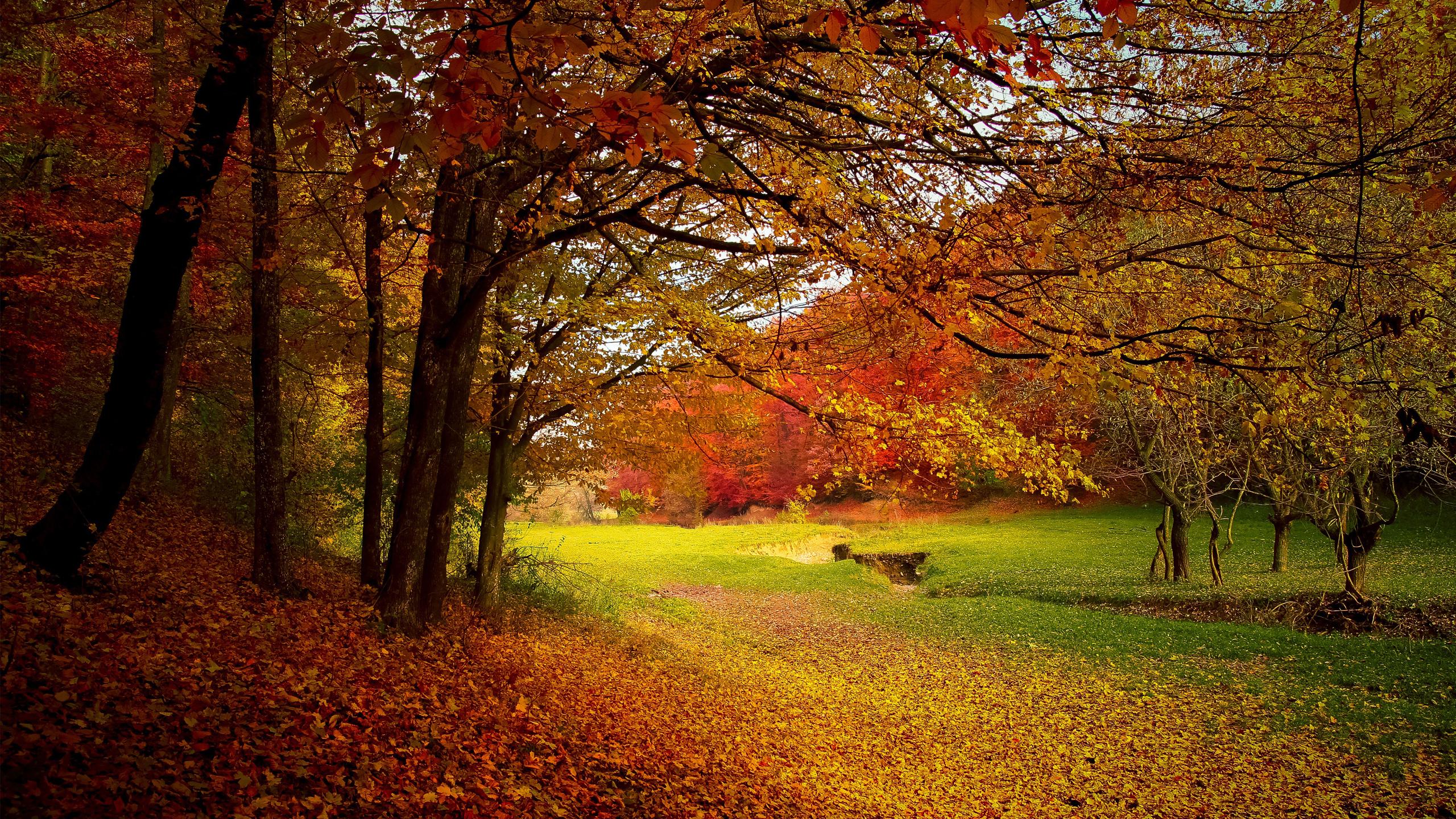 Осенний сезон. обои скачать