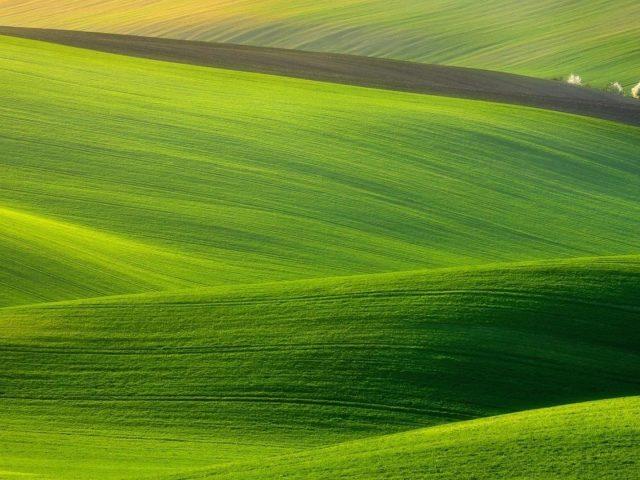 Пейзаж зеленой травы полей на холмах и белых деревьев природа