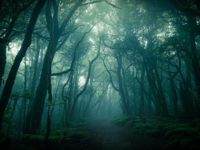Лесная природа тропинка вокруг деревьев и туманная природа