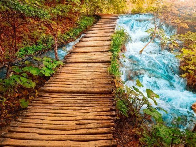 Деревянный причал между рекой, покрытый растениями, деревьями, травой, природой