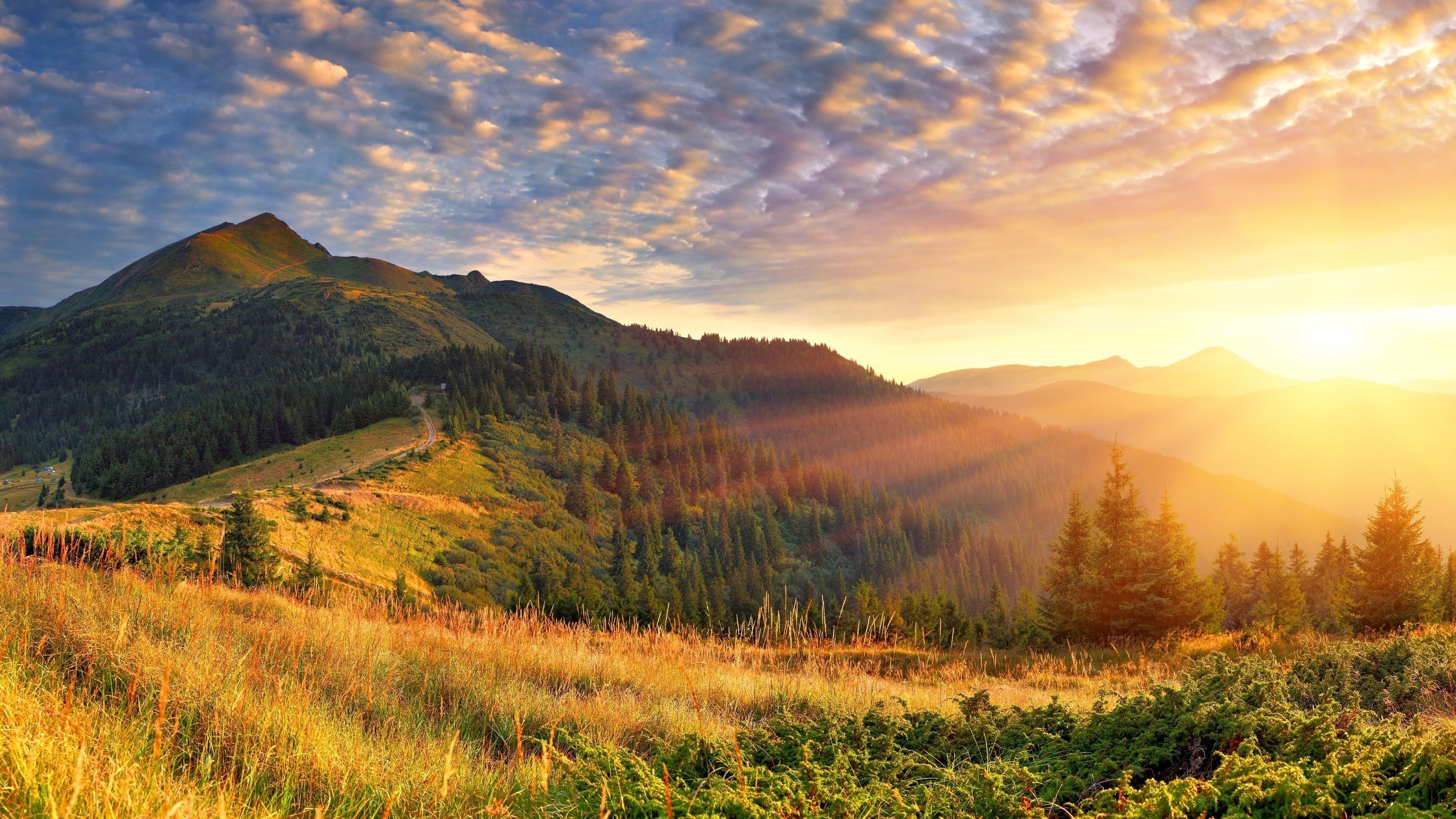 Зеленые деревья с зелеными покрытыми горными пейзажами утренние солнечные лучи природа обои скачать