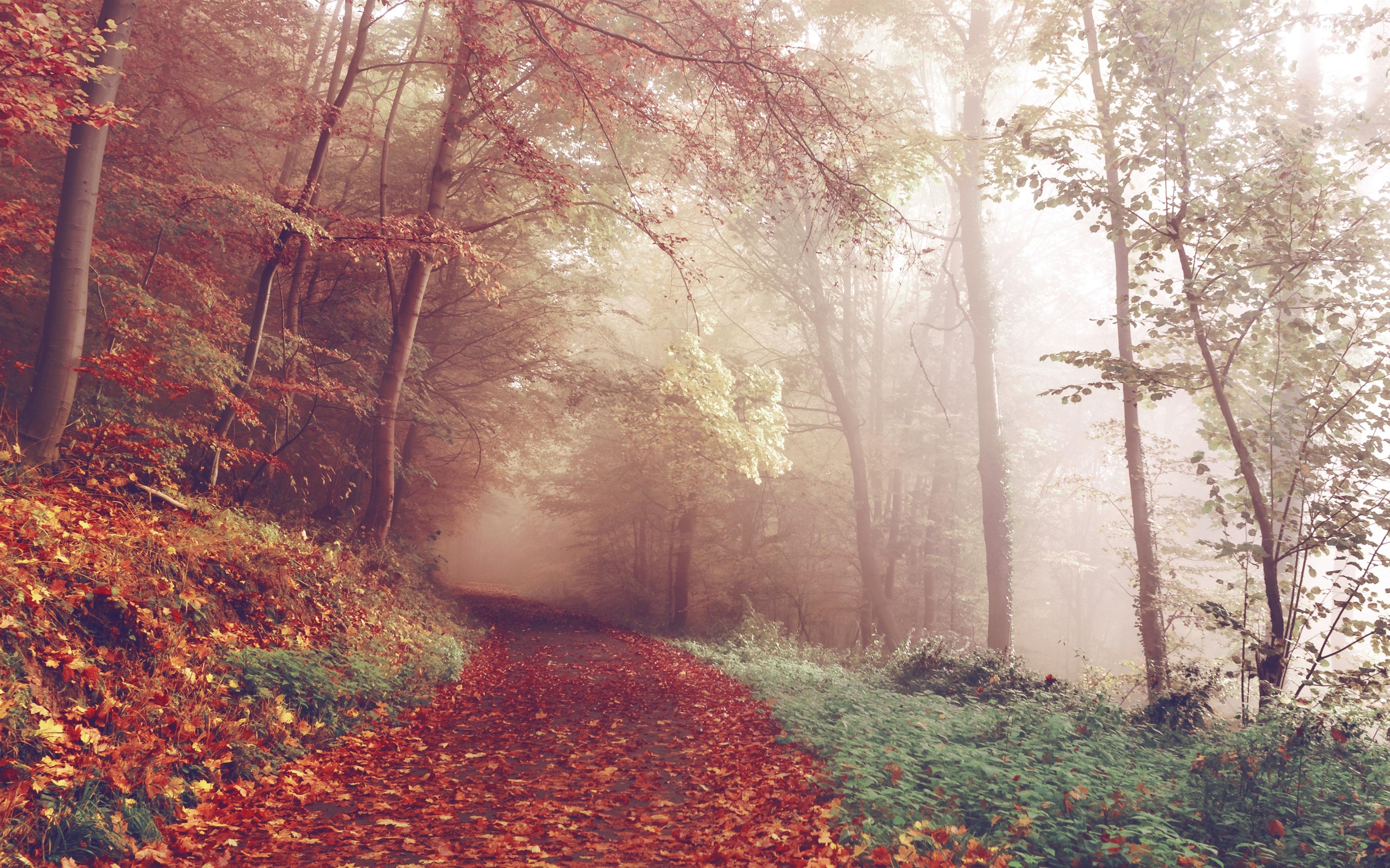 Осенний путь обои скачать