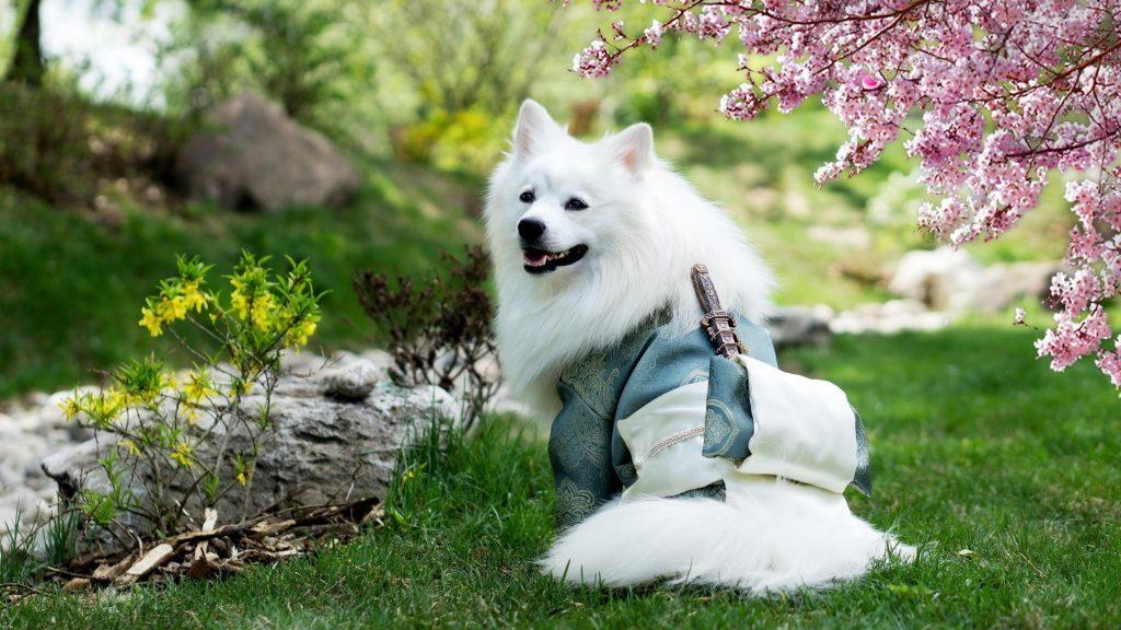Белая собака сидит на траве в размытом фоне сада собака обои скачать