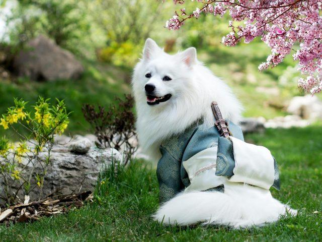 Белая собака сидит на траве в размытом фоне сада собака
