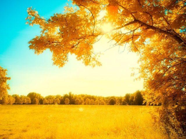 Желтые деревья природа восход солнца осень деревья осень