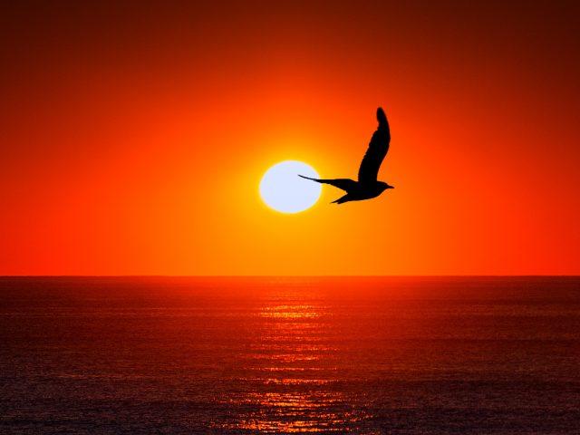 Закат, море, силуэт птицы
