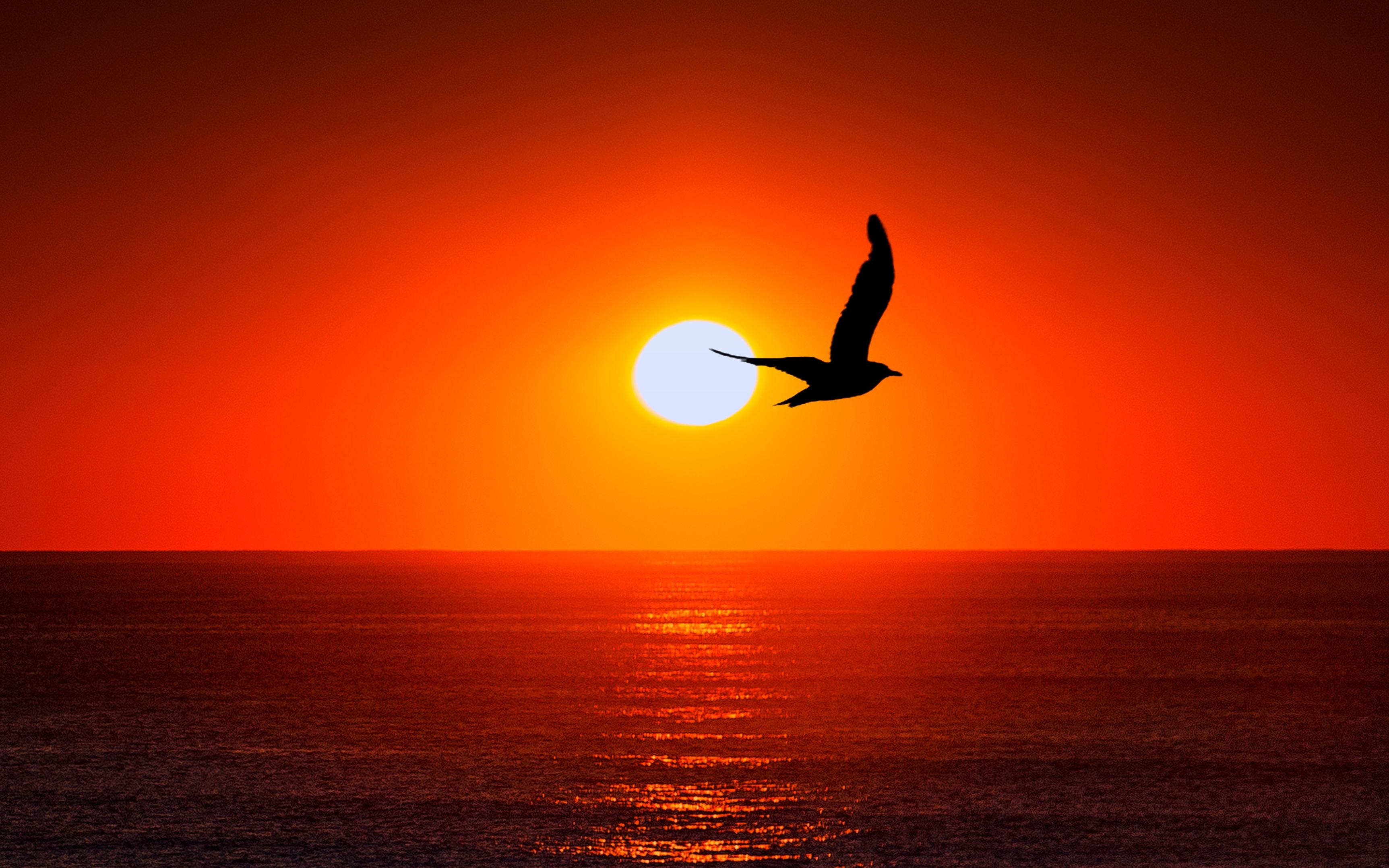 Закат, море, силуэт птицы обои скачать