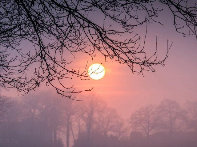 Ветка дерева с туманом во время заката зимы