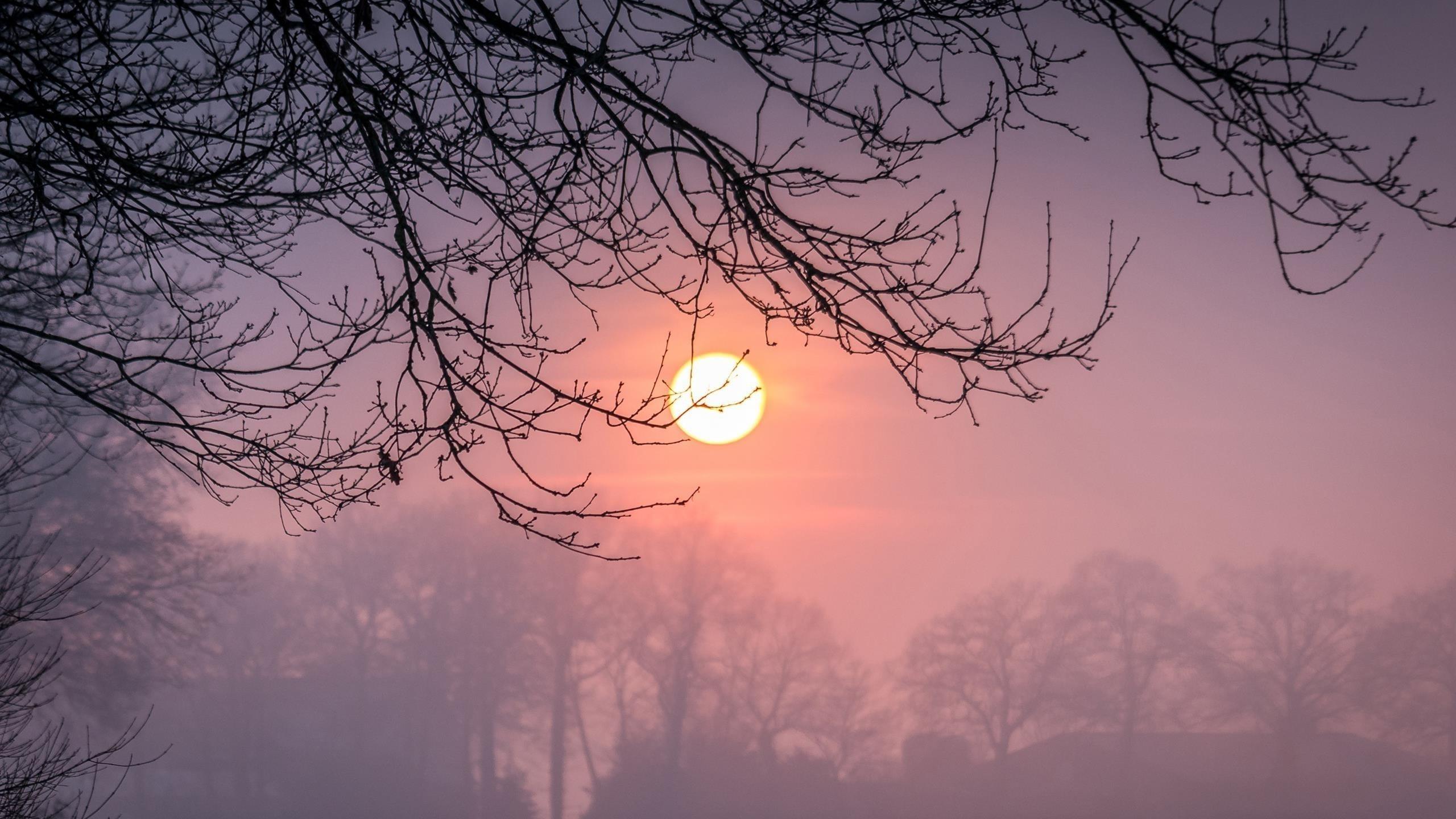 Ветка дерева с туманом во время заката зимы обои скачать