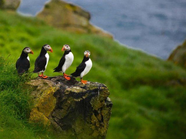 Четыре тупика находятся на скале с зеленой травой рядом в синей воде фоновые животные